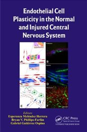 Endothelial Cell Plasticity in the Normal and Injured Central Nervous System - Melendez Herrera, Esperanza