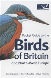 Pocket Guide to the Birds of Britain and North-West Europe   - Kightley, Chris