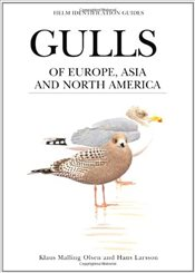Gulls of Europe, Asia and North America  - Olsen, Klaus Malling