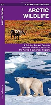 Arctic Wildlife : An Introduction to Familiar Species   - Kavanagh, James