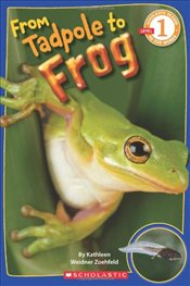 From Tadpole to Frog (Scholastic Reader: Level 1) - Zoehfeld, Kathleen Weidner
