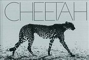 Cheetah - Segal, Mark