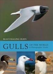 Gulls of the World : A Photographic Guide - Olsen, Klaus Malling
